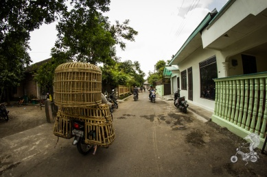 Cages on a scooter, to transport the roosters.